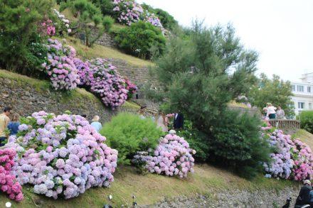 Die Hänge von Biarritz sind mit wunderschönen, farbenprächtigen Hortensien geschmückt.
