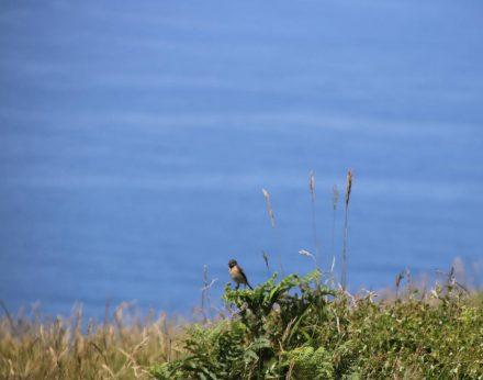 Am grünen Küstenweg begegnen uns viele verschiedene Vögel.