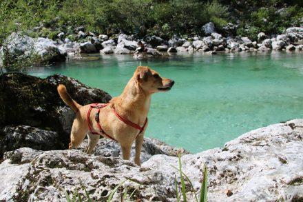 Wandern durch die Kobarid-Schlucht am Smaragdfluss Soca