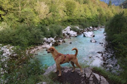 Für Hunde eine tolle Wanderung am Wasser entlang.