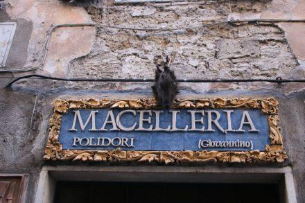 Ein Wildschweinkopf über der lokalen Metzgerei in Pitigliano.