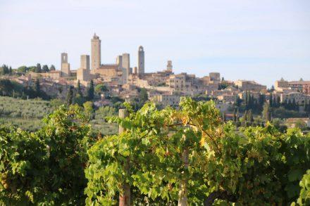 Die grünen Weinreben und dahinter die berühmten Geschlechtertürme von San Gimignano.