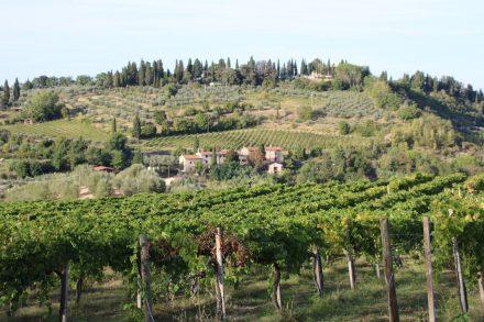 San Gimignano liegt eingebettet zwischen den Weinbergen der Toskana.