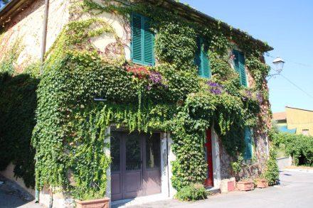 Eine wunderschöne Wein-Fassade im hübschen Bergdorf Tirli.