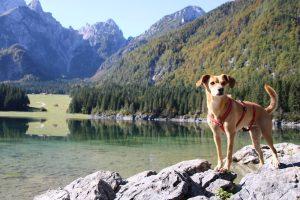 Am Fuß der Mangart Bergkette liegt der glasklare Fusine See.