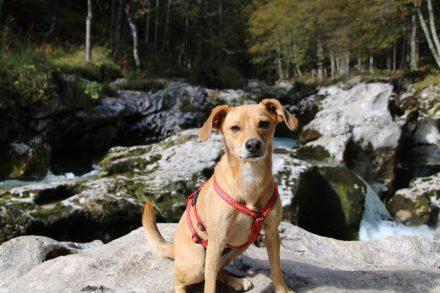 Traumhafte Wanderung am Mostnica Fluß entlang auch für die Vierbeiner.