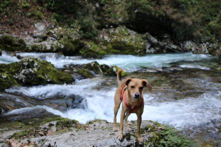 Für Hunde zwar geeignet, aber nicht sehr lustig, wenn sehr viele Menschen auf den schmalen Stegen unterwegs sind.