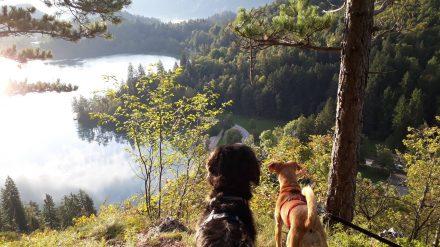 Die kleine Morgenrunde führt uns unverhofft zu diesem grandiosen Ausblick über den Bleder See.