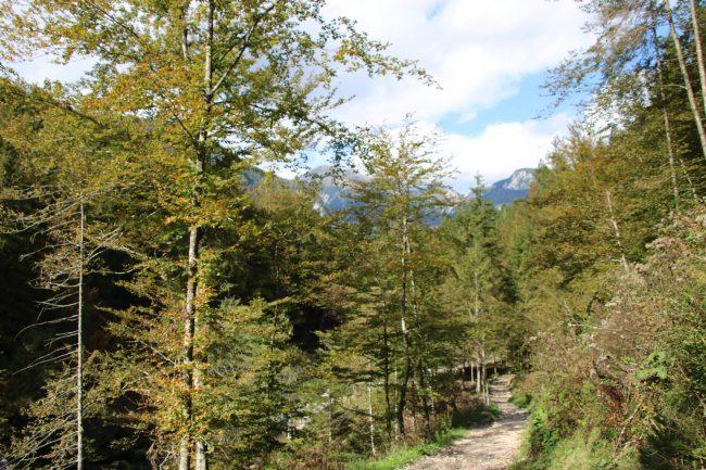 Ruhige Wanderung durch die herbstlich gefärbten Bäume im Slowenischen Triglav Gebiet.