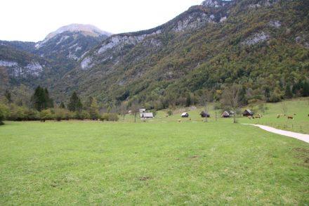 Die Almwiesen am Rande des Triglav Nationalparks.