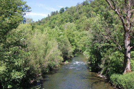 Idyllisch und beschaulich plätschert der Neckar durch grüne Auen