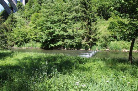 Der Neckar mitten im Grünen