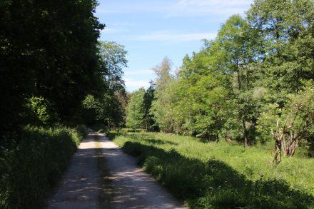 Der schattige Uferweg am Neckar kurz vor Horb