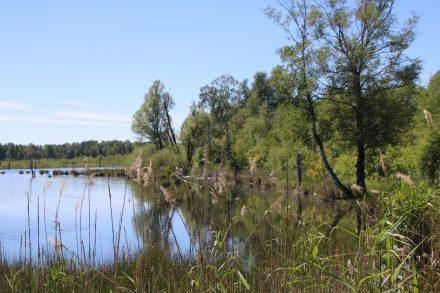 Naturbelassen lädt das Schwenninger Moor oder Moos zu einem Spaziergang ein
