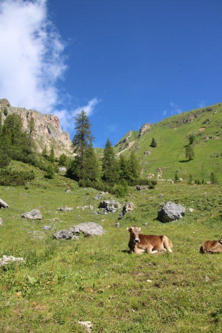 Wahrhaft paradiesisch und fernab des Trubels verbringt das Vieh auf der Kaserhütte den Sommer