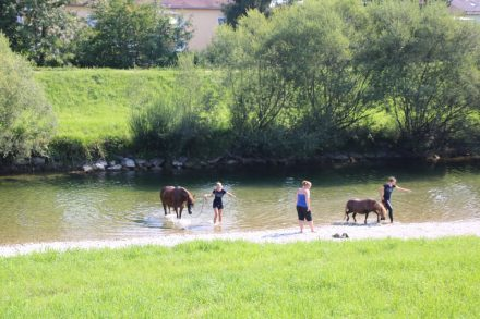 An einem heißen Tag genießen auch Pferde und Ponys die Abkühlung in der Mangfall