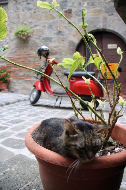 In einer Gasse in Modena hat sich dieses Kätzlein einen idyllischen Platz gesucht