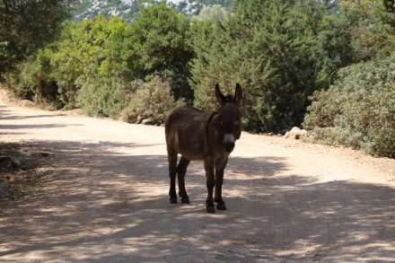 Am Parkplatz begrüßt uns dieser Esel