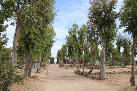 Neben den Terrassen-Stellplätzen gibt es auch viele großzügige Innen-Stellplätze am Camping Isuledda