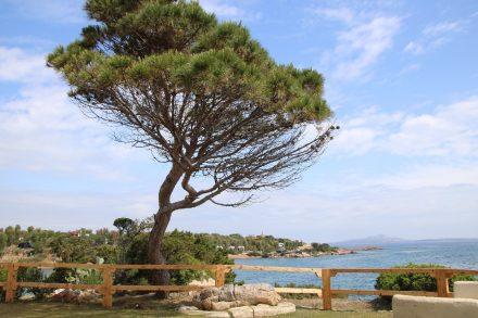 Der Relax-Garten im Camping Isuledda mit Blick über die Bucht