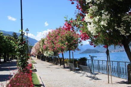 Das Blumenmeer entlang der Uferpromenade von Bellagio