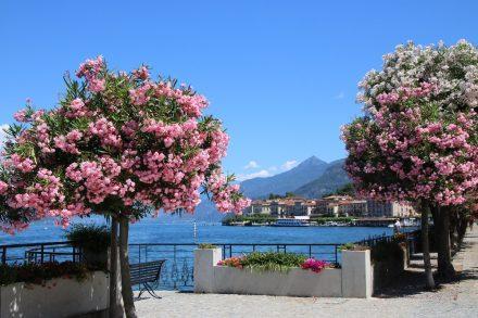 Ausflug nach Bellagio am Comer See