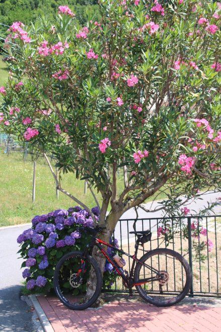 Im Sommer sorgt das mediterrane Klima am Comer See für üppige Blumenpracht